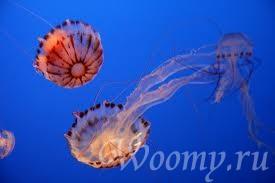 опасные морские обитатели