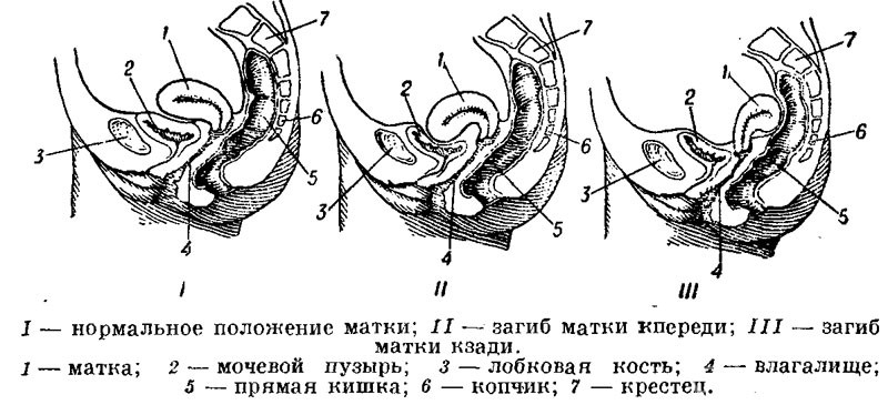 zastukal-masturbiruyushuyu-krasavitsu