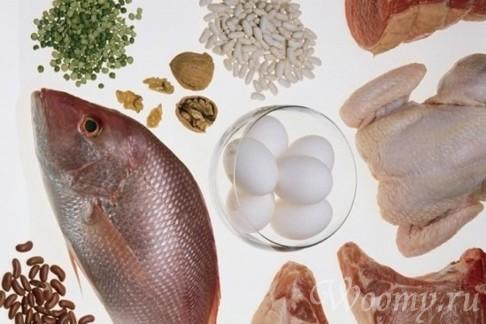 Особенности белкового питания
