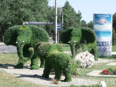 дружная семейка слонов в Анапе