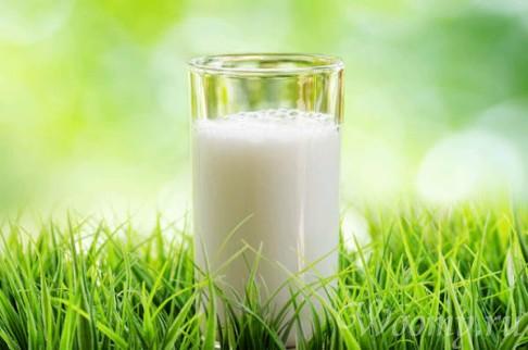 Как выбрать козье молоко